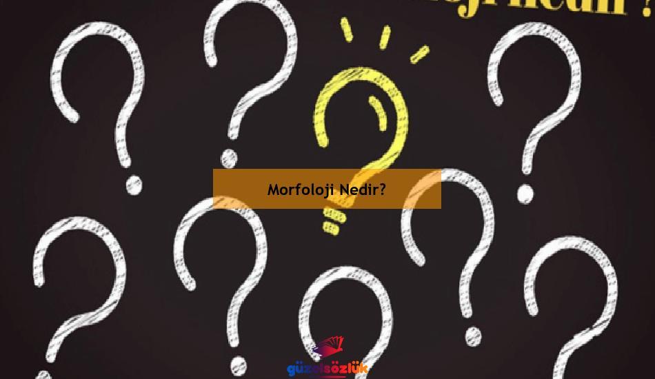 Morfoloji Nedir?
